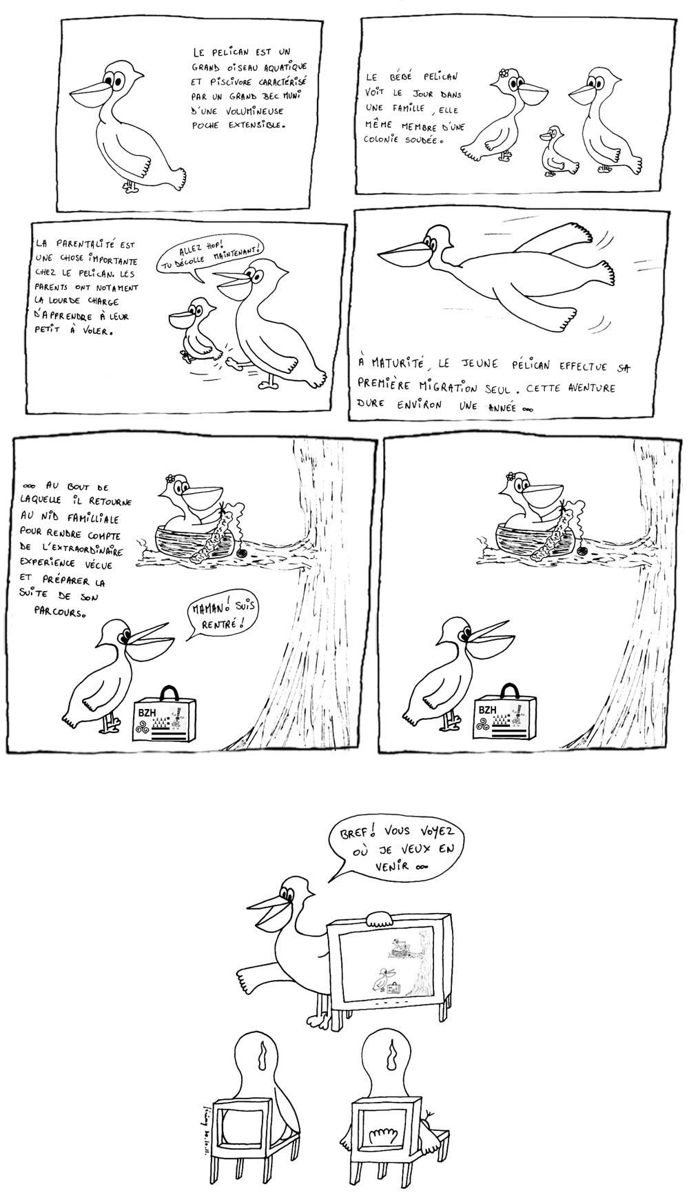 Opération migration du pélican sauvage 2, le retour (c'est le cas de le dire)