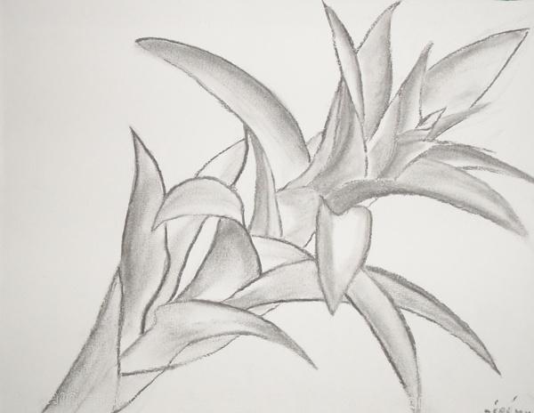 Fleur - fusain